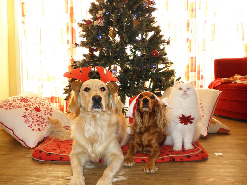 christmas pet risks