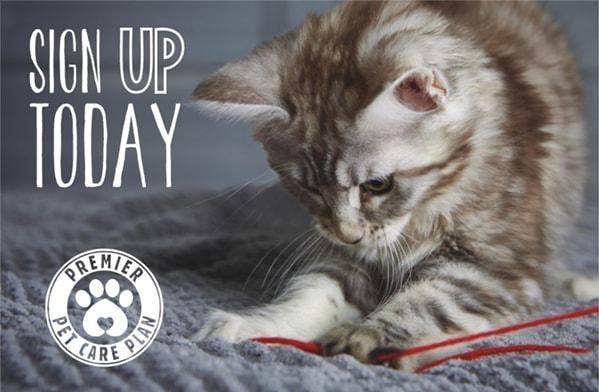 cat-health-plan-sign-up-vets-in-preston