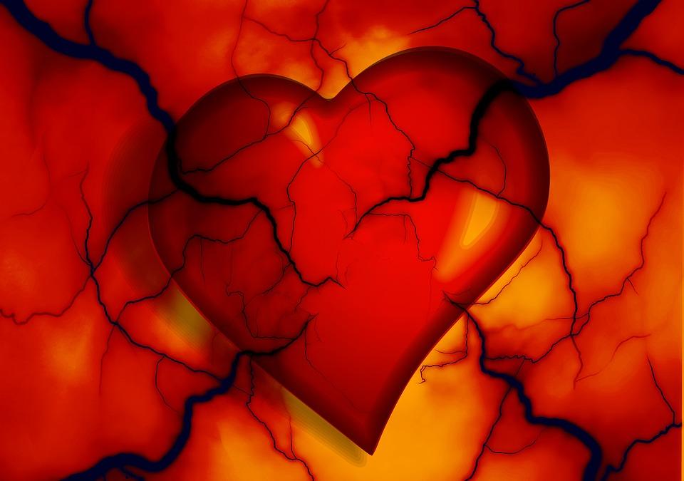 heart disease in pets feature imae