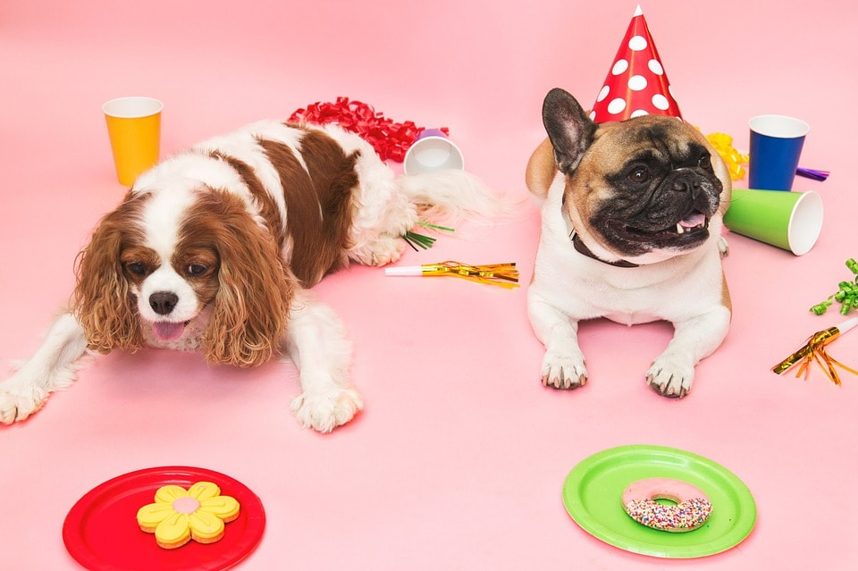 puppy-parties-preston-withy-grove-vets