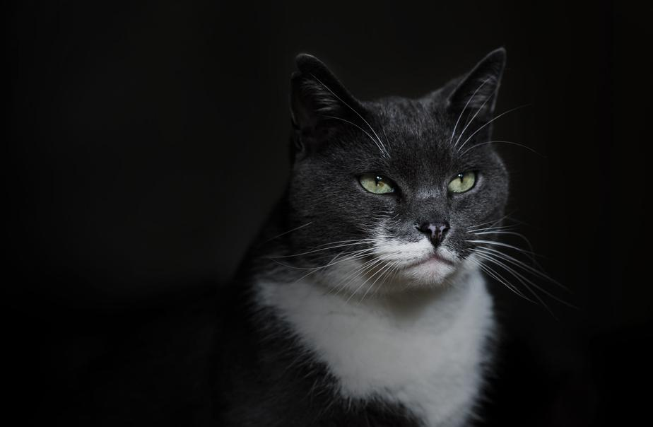 Green-eyed cat stands againts black background.