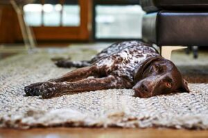 Dog laying cmfortably.