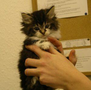Kitten in hands.