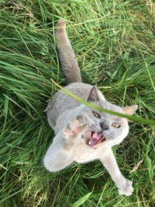 Aggressive cat.